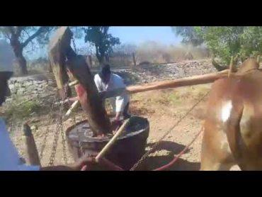 Bull Driven/Ganuga Oil in USA