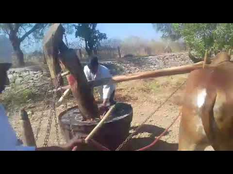 Ganuga/Bull Driven Oil in USA